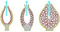 Porifera body structures 01.png