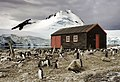 Port lockroy, antarctica (5541687349).jpg