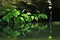 Portola Redwoods State Park, ferns.jpg