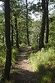 Praha, Kunratice, les u Nového hrádku.jpg