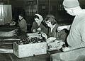 Proizvodni proces v IFA Celje 1964.jpg