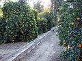 Prospect Park Orange Grove, 2005 (6589247693).jpg