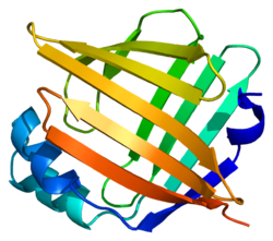 Protein FABP5 PDB 1b56.png