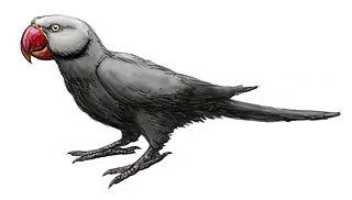 Mascarene grey parakeet Extinct parrot from Mauritius and Réunion