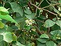 Puramu (Telugu- పూరము) (818916247).jpg