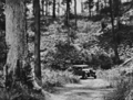 Queensland State Archives 1112 On the road to Mount Glorious showing Bracken and Standing Timber near Brisbane January 1931.png