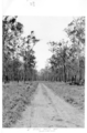 Queensland State Archives 4310 Roads to new farms at Childers Soldiers Settlement 1950.png