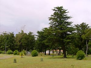 Recreational Forest Reserve of Valverde - The open spaces near the deer and animal pens, looking towards the children's park and washrooms