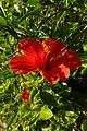 Ramat Gan flowers 12 2015 (124).JPG