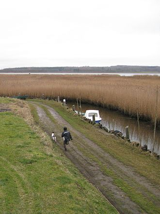 Coastline of Djursland - In many places access to Randers Fjord is inhibited by reed banks