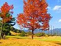 Red Tree in Kameyama - panoramio.jpg
