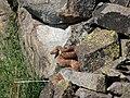 Red diamond back rattlesnake (6033871308).jpg