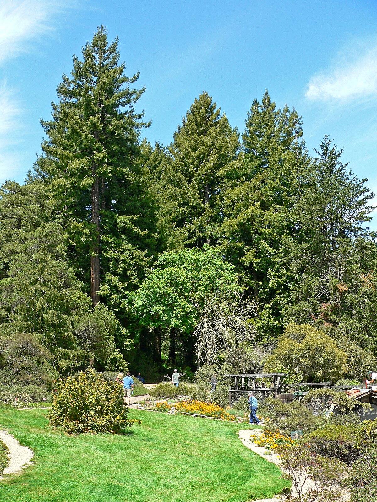 Regional Parks Botanic Garden - Wikipedia