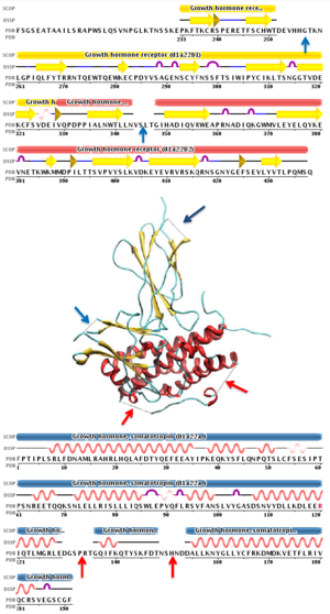Intrinsically disordered proteins - Image: Remark 465 1a 22 HUMAN GROWTH HORMONE BOUND TO SINGLE RECEPTOR