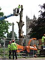 Removing the plane trees, Exeter - geograph.org.uk - 475611.jpg