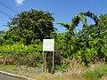 Research garden - San Juan Botanical Garden - DSC07077.JPG