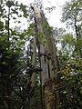 Rezerwat przyrody Dęby w Meszczach 11.31.jpg