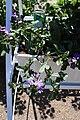 Rhododendronpark Bremen 20090513 177.JPG