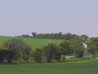 The Ridgeway - The ancient tree-lined path winds over the downs countryside