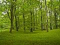 Rimberg (Hinterland) - Forest.jpg