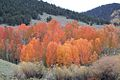 Rio Grande National Forest in Southern Colorado.jpg