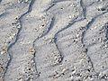 Ripples in backbeach channel (Cayo Costa Island, Florida, USA) 19 (26058685100).jpg
