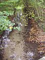 River Cong 15th October 2007 (1).JPG