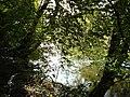 River Derwent - geograph.org.uk - 298038.jpg