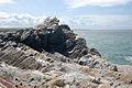 Rock strata near Fox Cove (3) - geograph.org.uk - 1473749.jpg