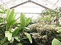 Rockefeller Park Greenhouse.jpg