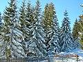Romania Marisel Winter - panoramio.jpg