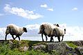 Roundstone, co Galway, Ireland.jpg