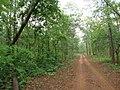 SIMILIPAL FOREST RANGE.jpg