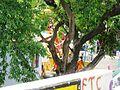 SRI PALATHU MUNIYAPPAN TEMPLE, THOPPUR - panoramio (7).jpg