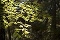 Saihoji Temple moss gardens, Kyoto (6290140464).jpg