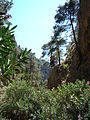 Saint Irene gorge Crete c.jpg