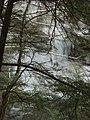 Salt Springs State Park (3284697998).jpg