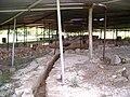 San Giustino Fouilles Colle Plinio1.jpg