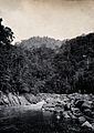 Sarawak; falls on the Baram River. Photograph. Wellcome V0037435.jpg