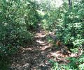 Sassafrass Trail Rothrock State Park.jpg