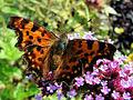 Schmetterling01.JPG