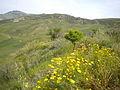 Scicli (Sicilia) 2010 068.jpg