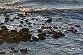 Seagull Landing (8434350678).jpg