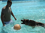 Security Forces conducts K-9 water training 130910-F-SY464-062.jpg