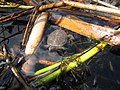 Seney National Wildlife Refuge (6092317267).jpg