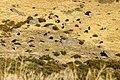 Serra Estrela (8124998221).jpg