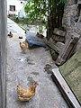 Shantou, Guangdong, China P1050156 (7477601382).jpg
