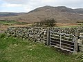 Sheep pen on the Banns Road - geograph.org.uk - 1209060.jpg