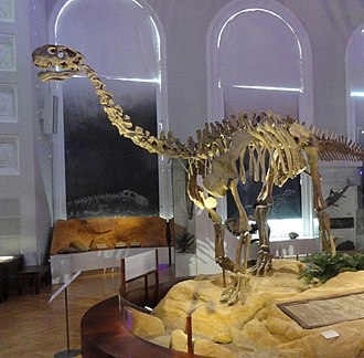 Shunosaurus - Mount in the Finnish Museum of Natural History