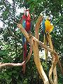 Singapore Zoo 12.JPG